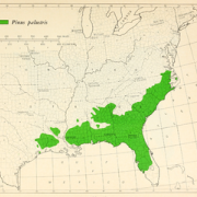 Longleaf Pine Range Map 1966