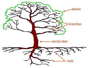 Illustration of the major components of trees.